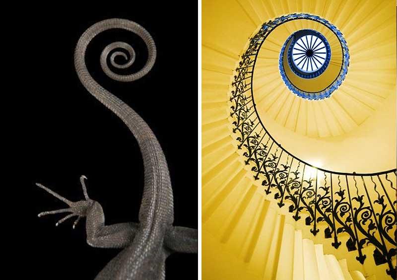 Спираль в природе и спираль arquitecturaLa в природе и архитектуре