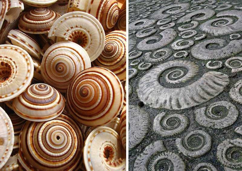 Спираль в природе и архитектуре